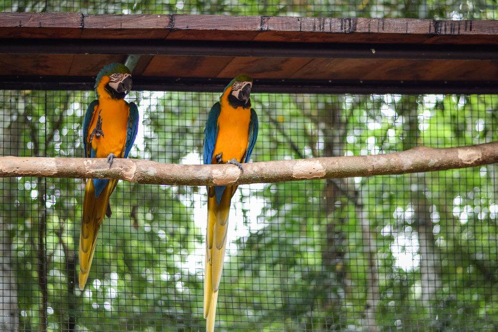 Bird-Park-22.jpg