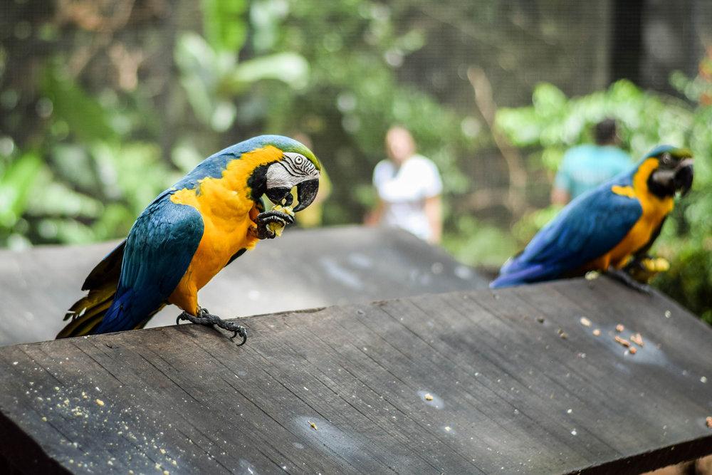 IguazuBirdPark-6.jpg