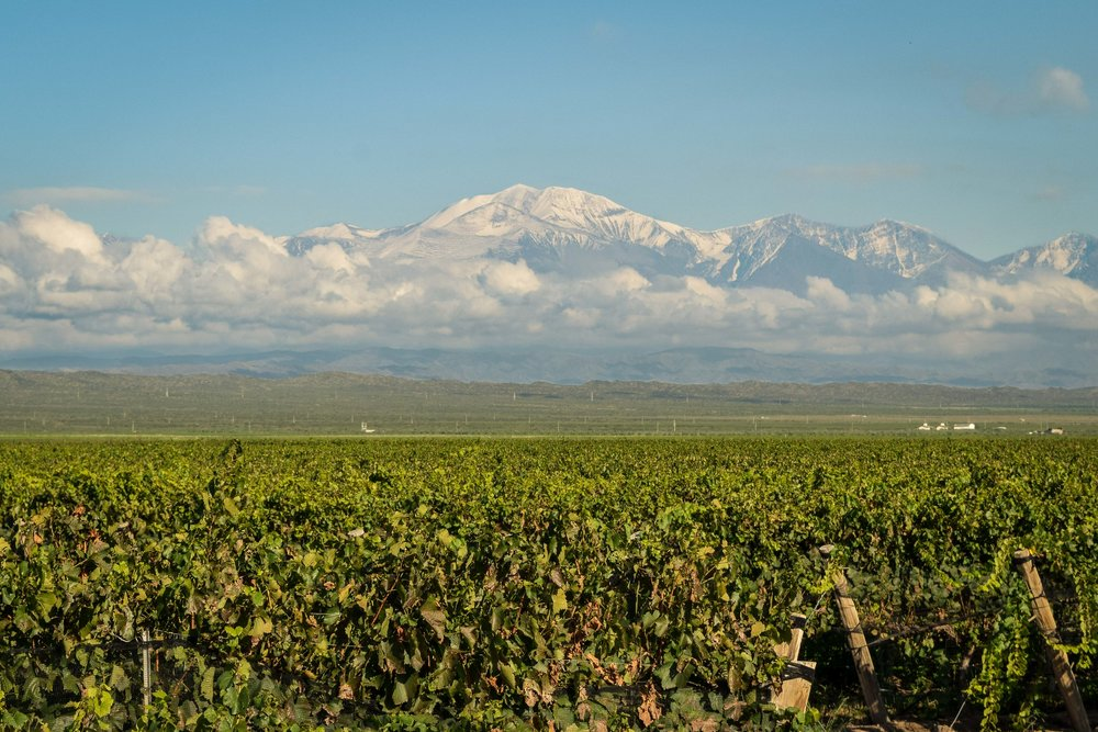 Mendoza vineyards, Argentina