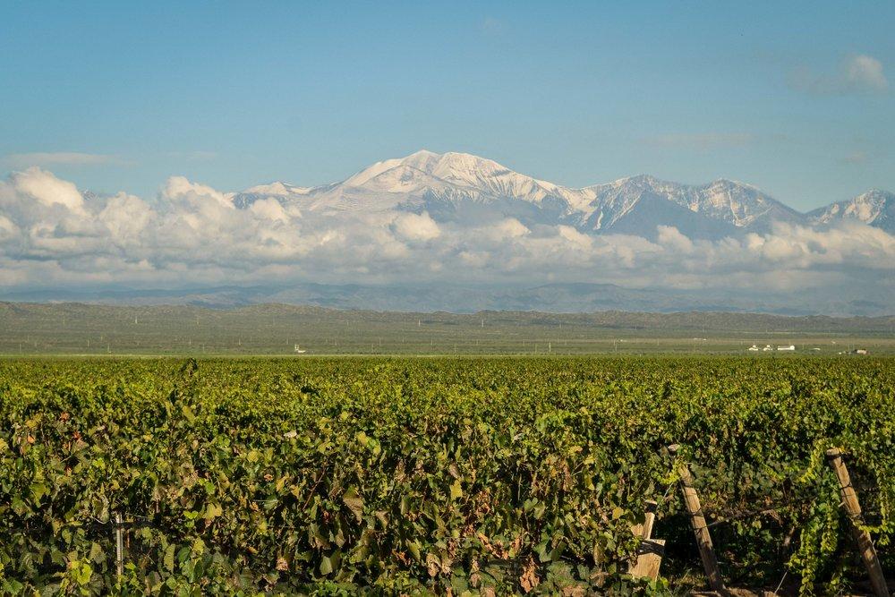 Mendoza vineyards, Argentina