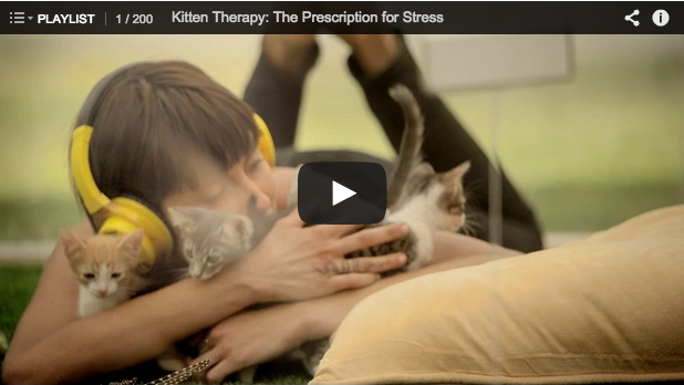 self-care, kitten therapy, will bratt counselling