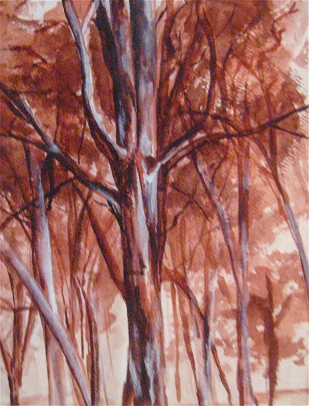 Gum Tree Study, 2006, Ink & Pencil on Paper,  UNAVAILABLE