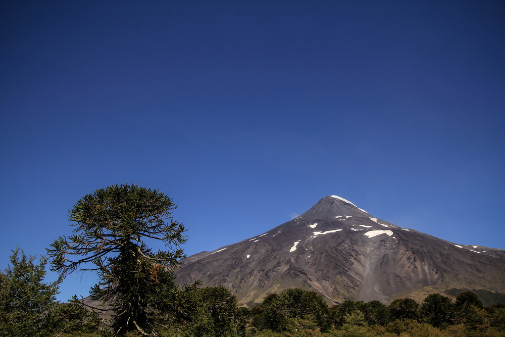 Volcan Lanin with a Monkey Puzzle tree