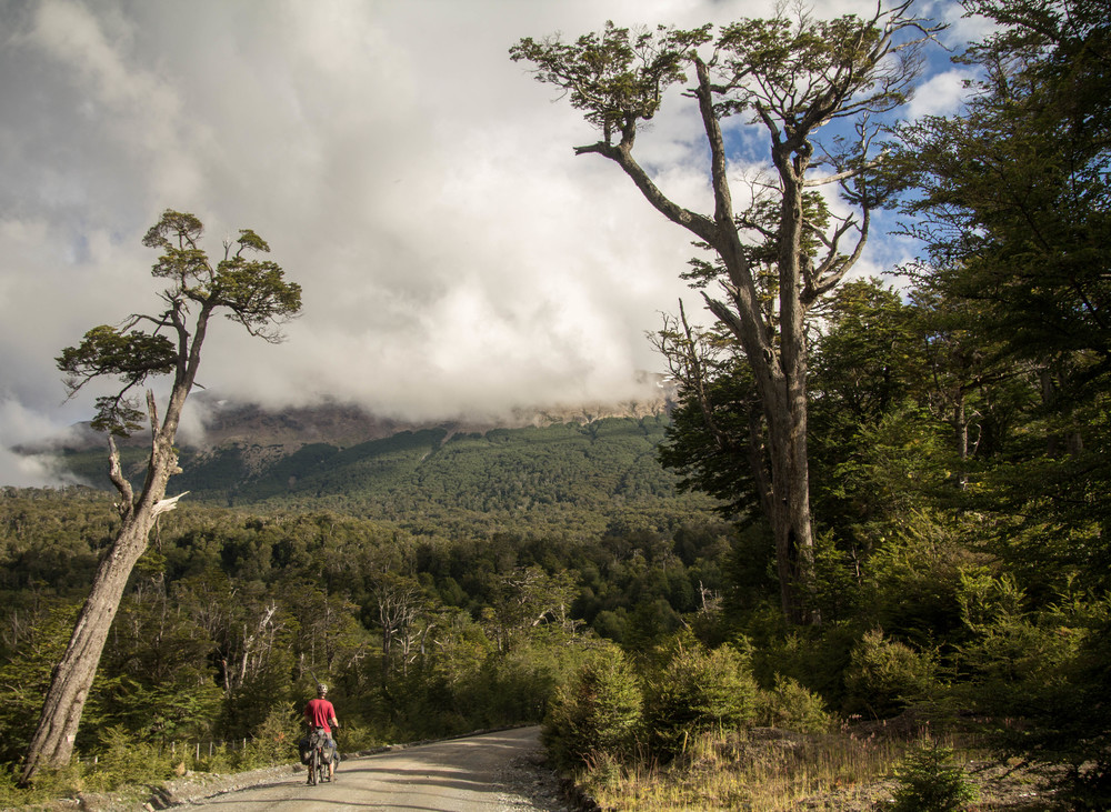 Bryce cycling through the forest of southern Chile