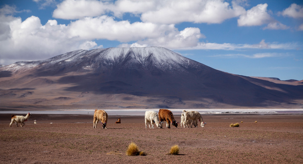 Llamas and volcanoes, a common site in south-west Bolivia