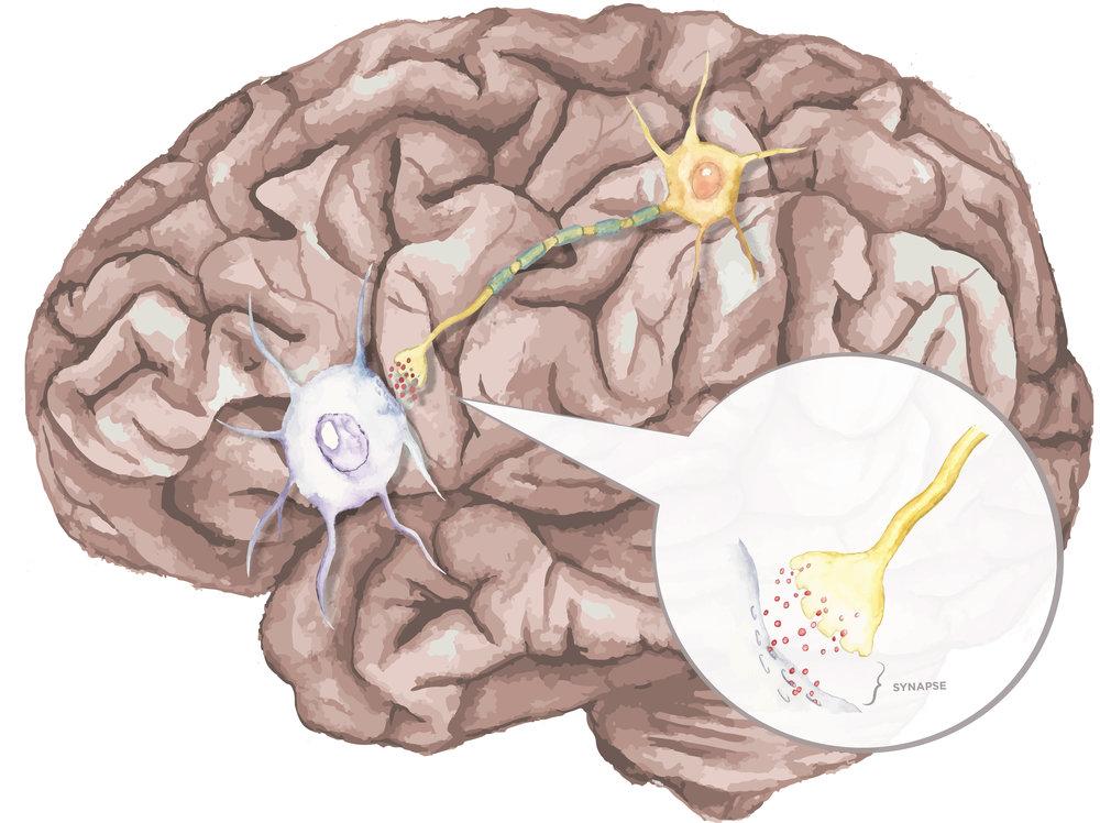 synapse4.jpg