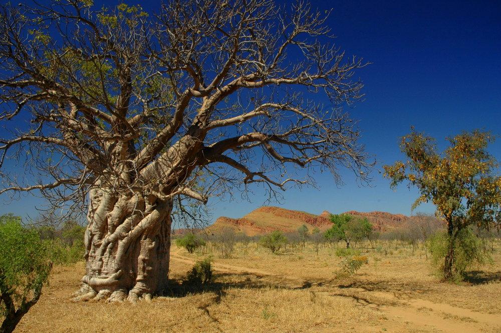 Kimber, Western Australia - photo copyright Steve Robertson, Portland, Victoria, Australia.