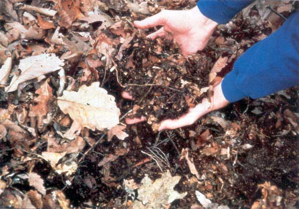 Leaf litter - US Forest Service photo