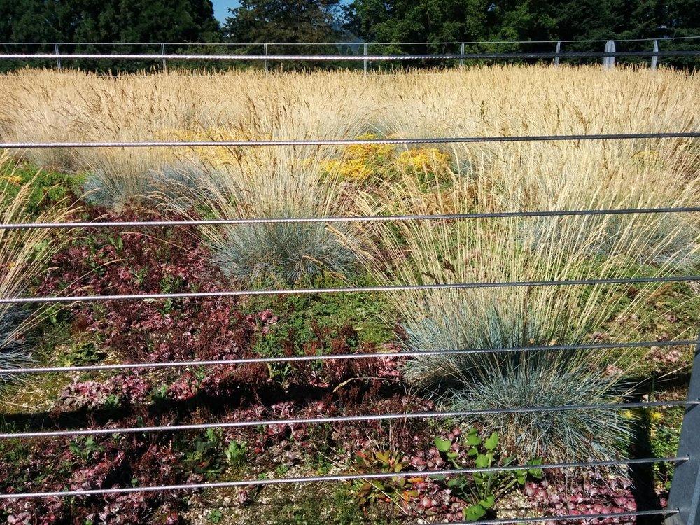 green roof-Reed College, Oregon.jpg
