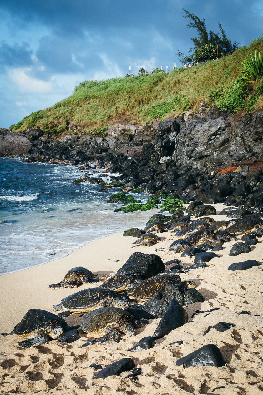 Hawaii-Blog-100.jpg