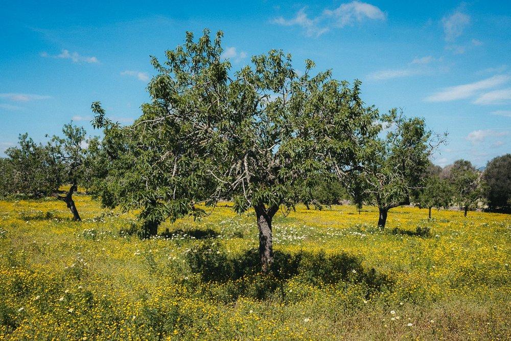 Fototagebuch_Mallorca_180327_049.jpg