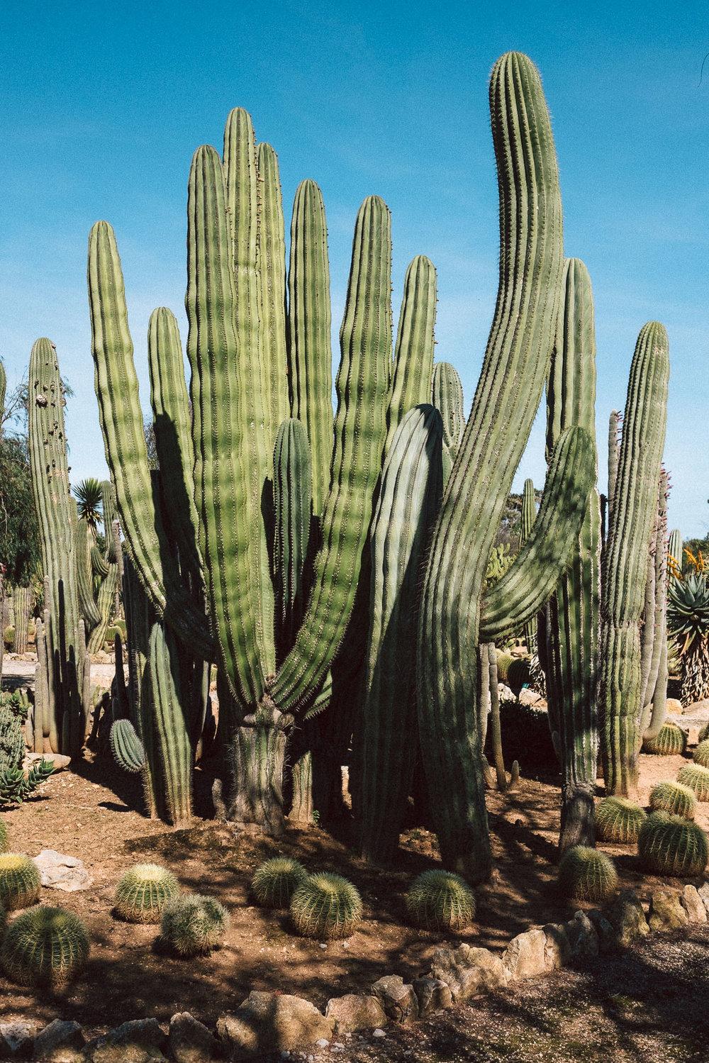 Fototagebuch_Mallorca_180327_053.jpg