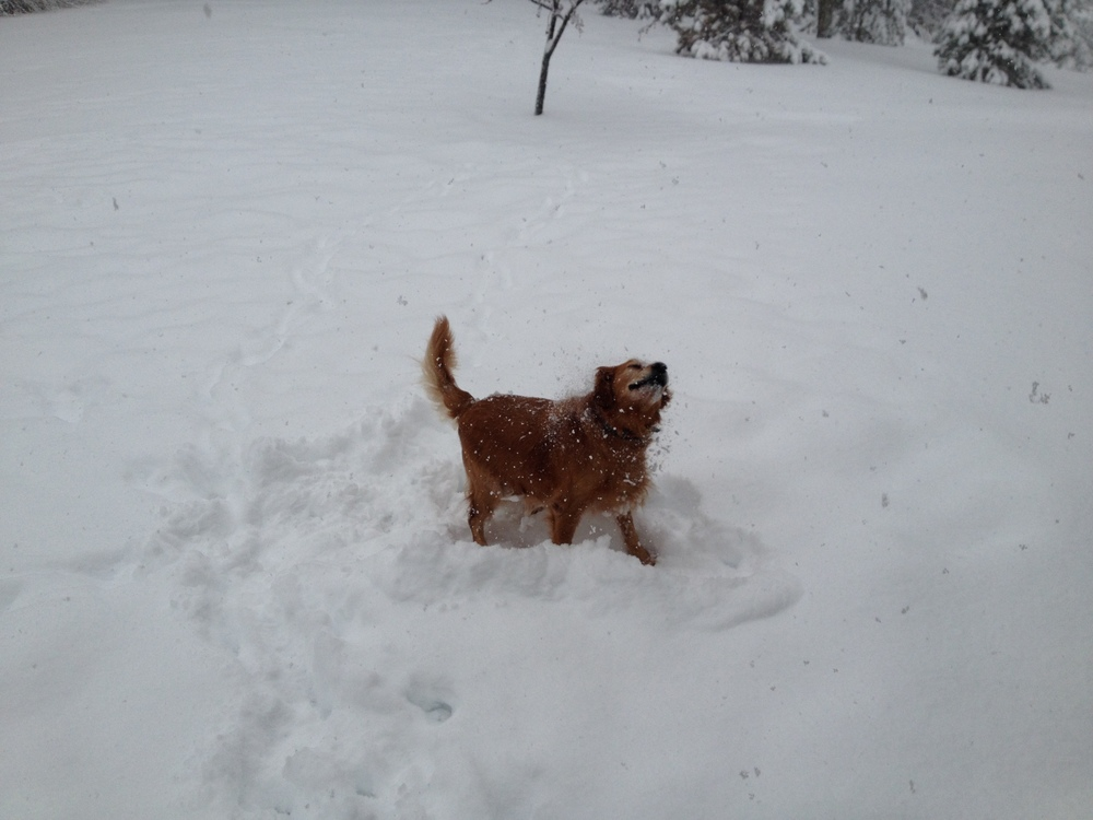 Brandy in snow.JPG