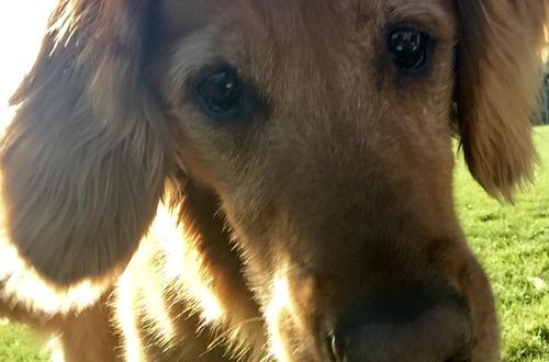 Riley