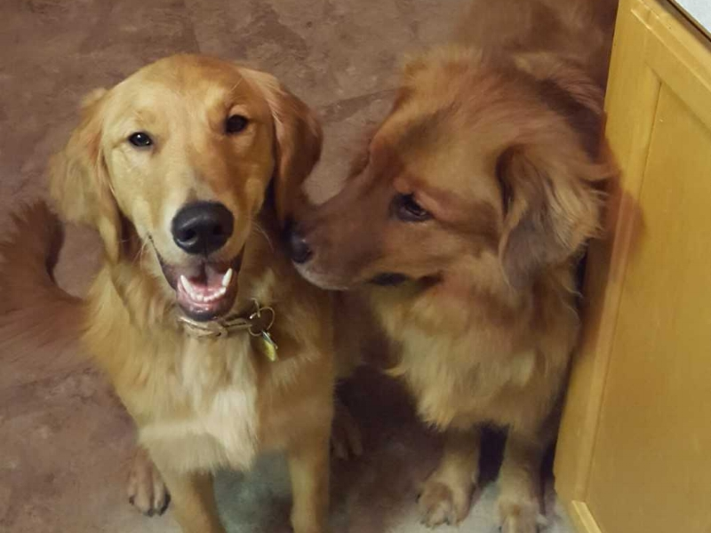Elsa 18-038 and her new brother Max.jpg