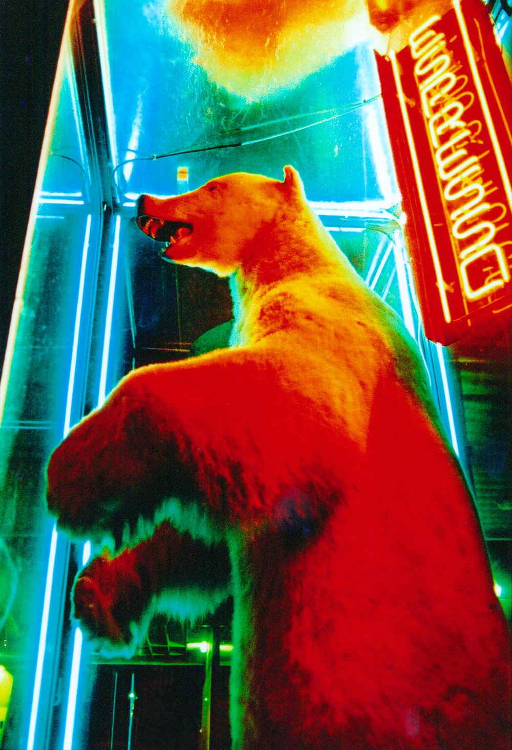 "ESPRESSO BEAR    1999    30""X40""    Edition of 10    *contact for price"