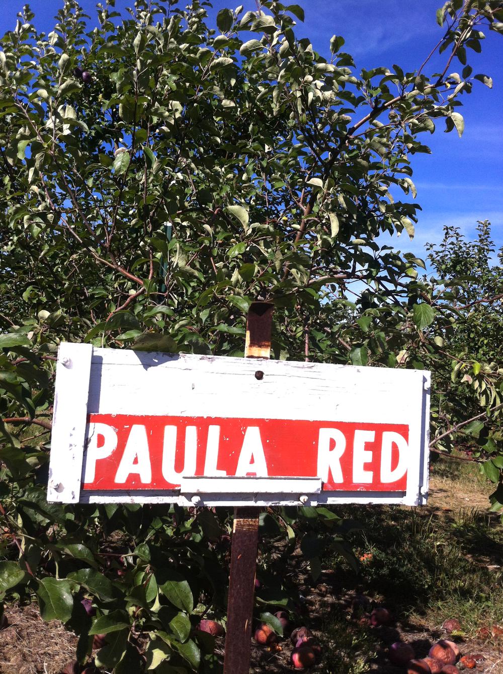 paula-red