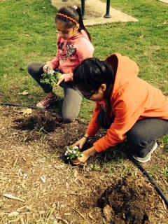 Planting3_May 2014.JPG