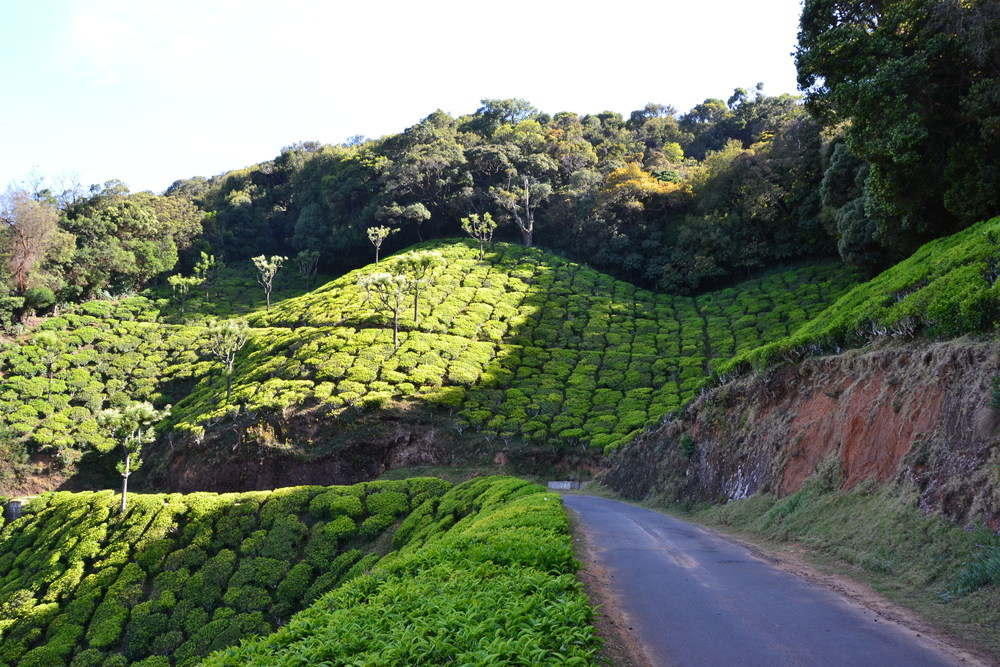 The hills of Ooty. Picture by Mathew McDermid
