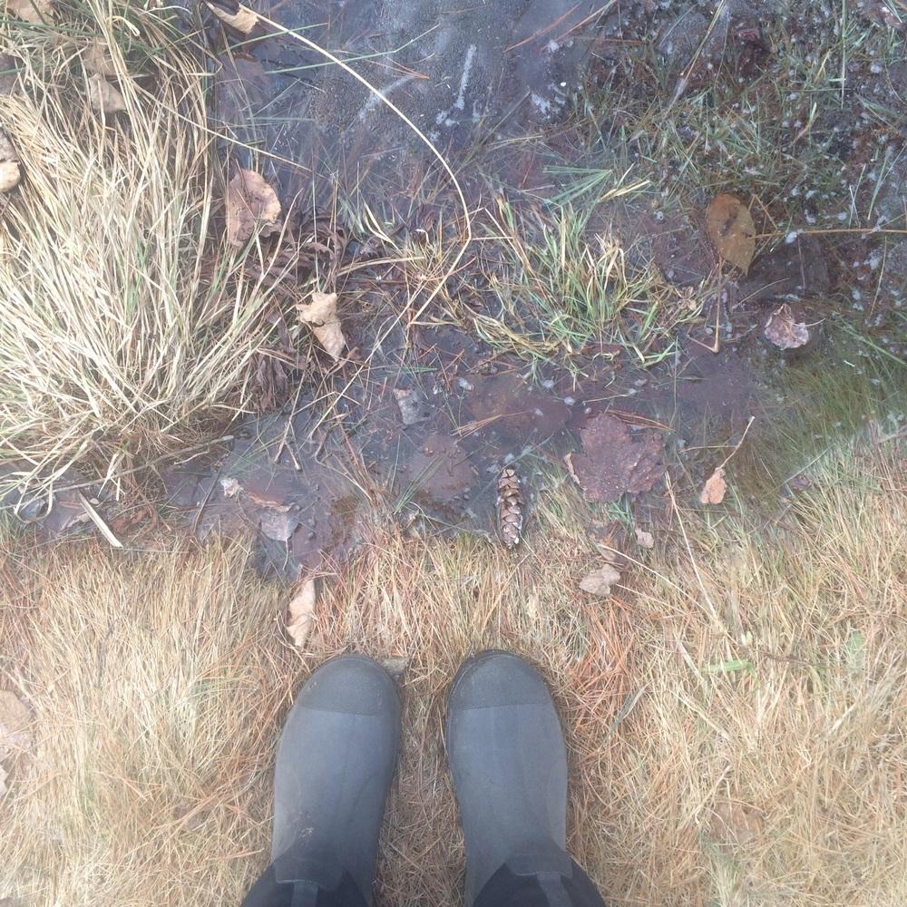 The still frozen shore on Thursday morning