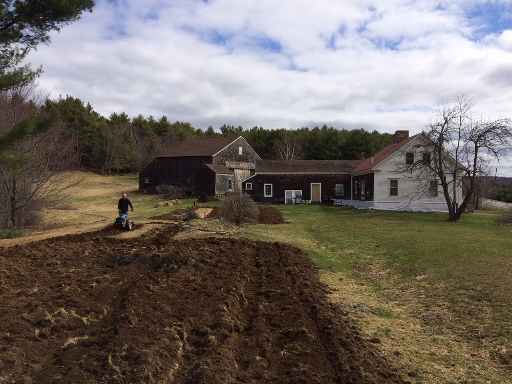 Mike and the BCS making quick work of the sod to clear room for the herb garden and the raspberry/rhubarb patch.