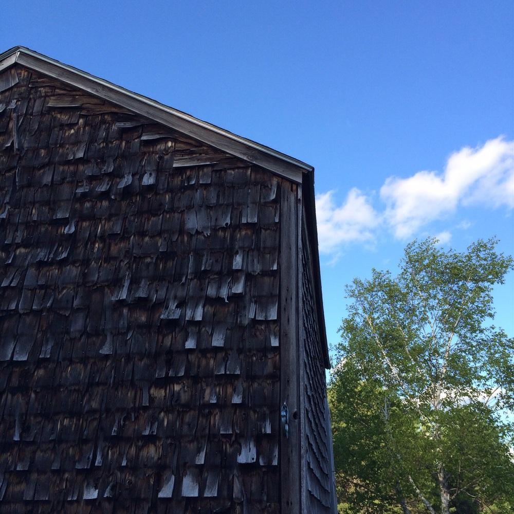 Chicken coop and dooryard birch.