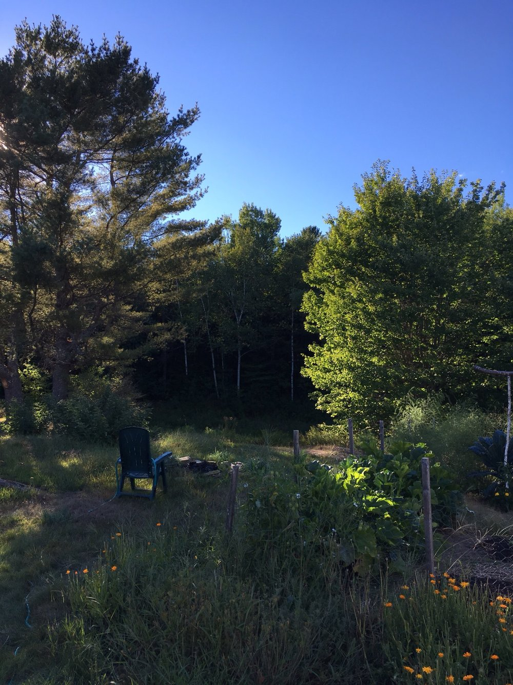 If you've ever visited my parents in the growing season, you were most likely given a garden tour. In the family tradition, here's a virtual tour of our kitchen garden. This is the end closest to the pond (completely dry in this drought), the twin pines, and the fire pit. The outside beds contain various still-blooming calendula varieties and gone-by poppies (California and corn). In the garden is the zucchini patch in the foreground and asparagus in the back.