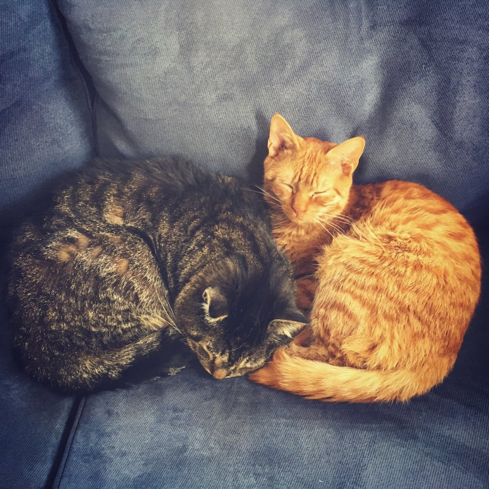 Fozzie and Floyd, practicing their superpowers (napping and being cute).