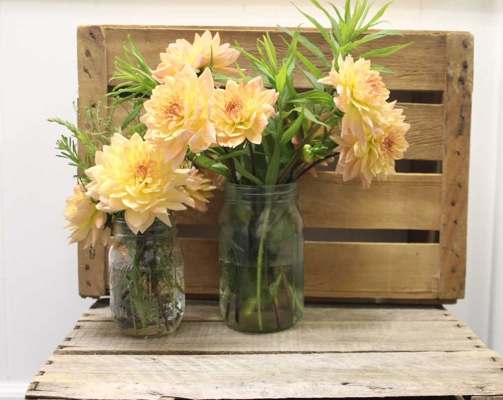 Flowers in vase change water - Change Your Water It S Simple Really Flowers Want Fresh Clean Bacteria Free Water I Know A Lot Of People Suggest Filling Your Water With Bleach