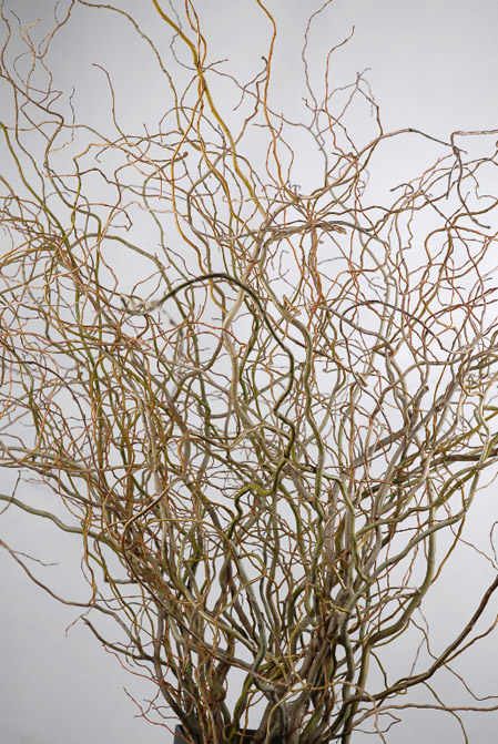 curly-willow-branches-5-ft-3.jpg