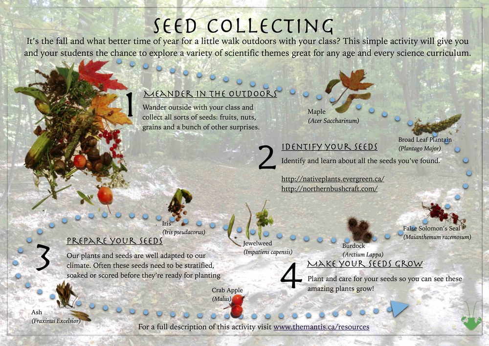 Seed Collecting.jpg