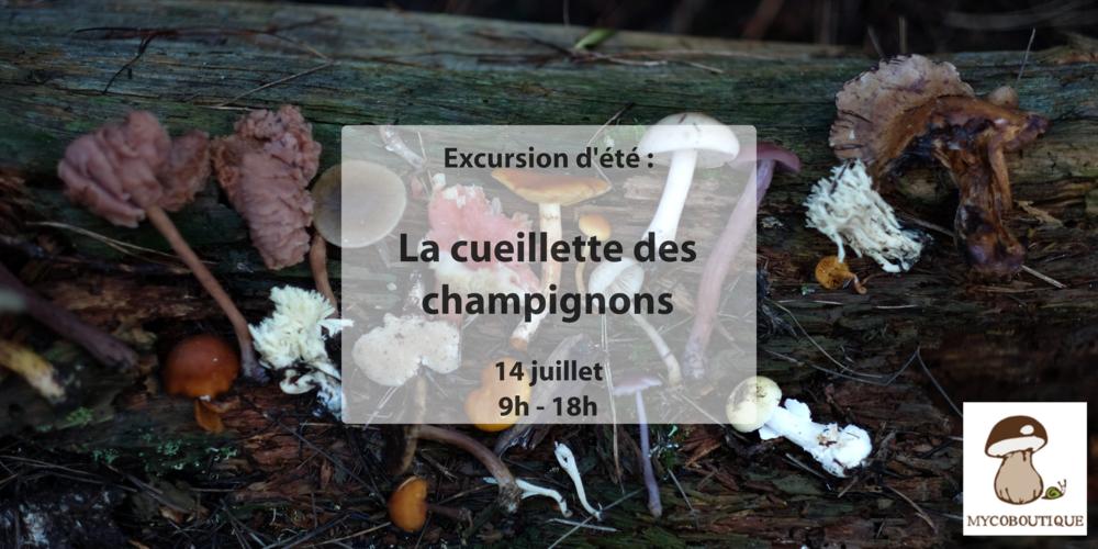 champignon.png
