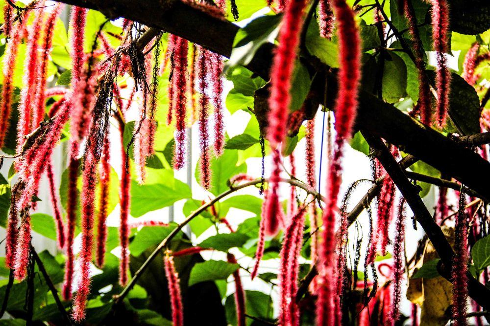 Botanic-1-2.jpg