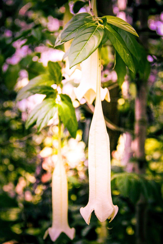 Botanic-4.jpg