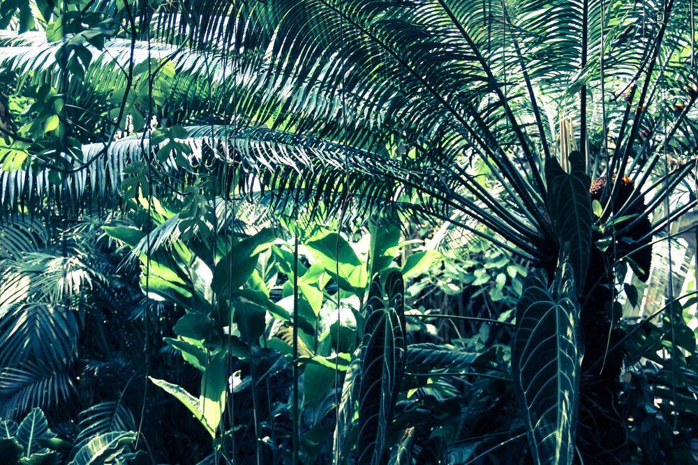 Botanic-5.jpg