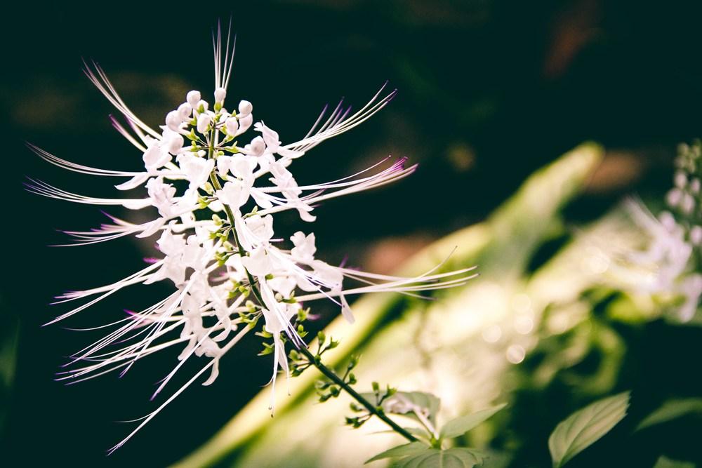 Botanic-10.jpg