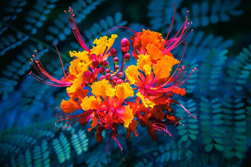 Botanic-12.jpg