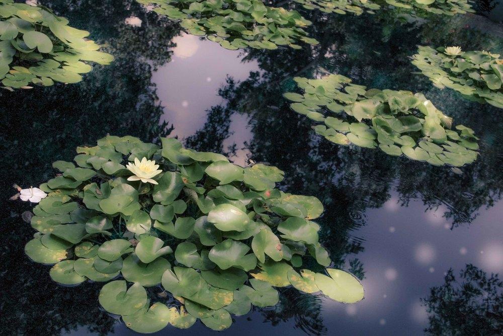 Botanic-14.jpg