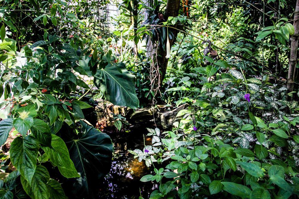 Botanic-20.jpg
