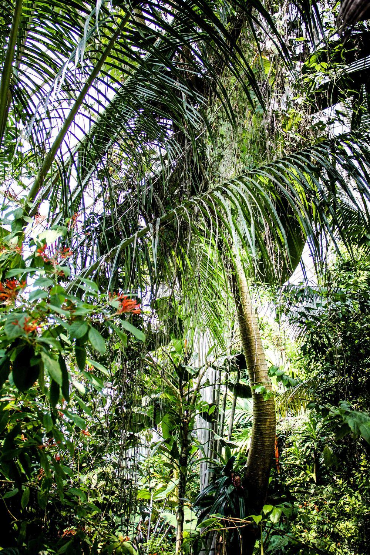 Botanic-20-2.jpg