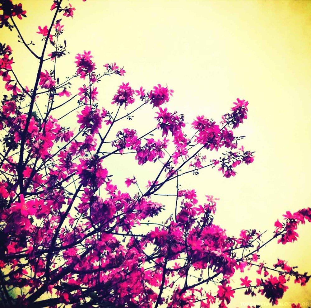 april_wood_iphone-39.jpg