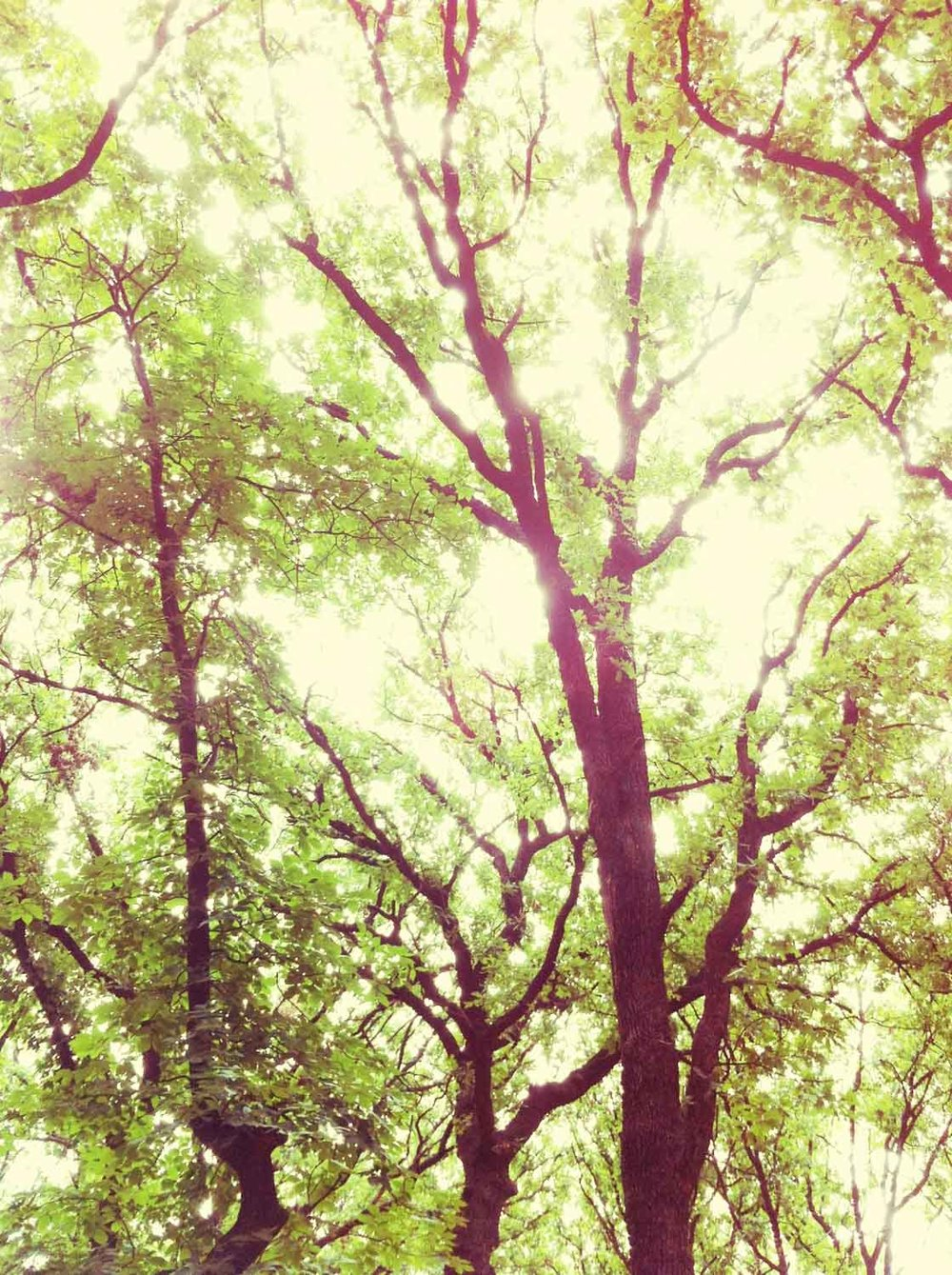 april_wood_iphone-43.jpg