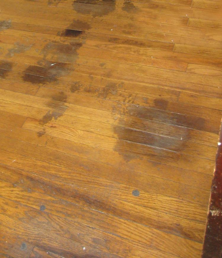 are pets and hardwood floors compatible? — plus hardwood flooring