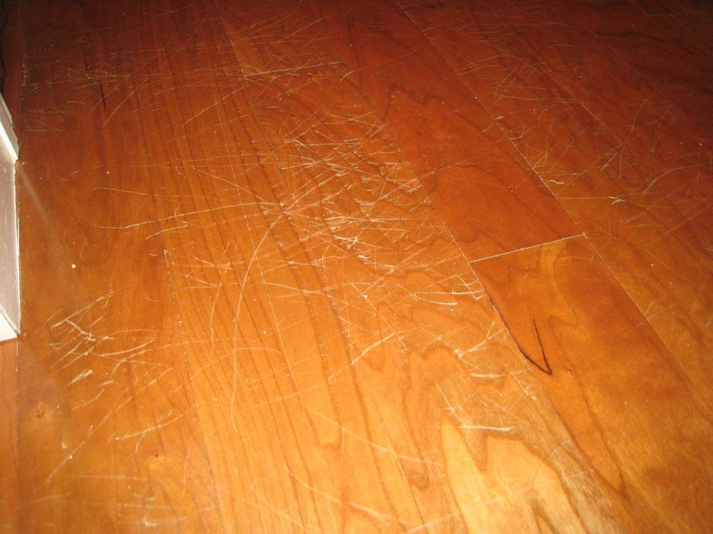 Someone didn't have their nails trimmed. - Are Pets And Hardwood Floors Compatible? €� Plus Hardwood Flooring