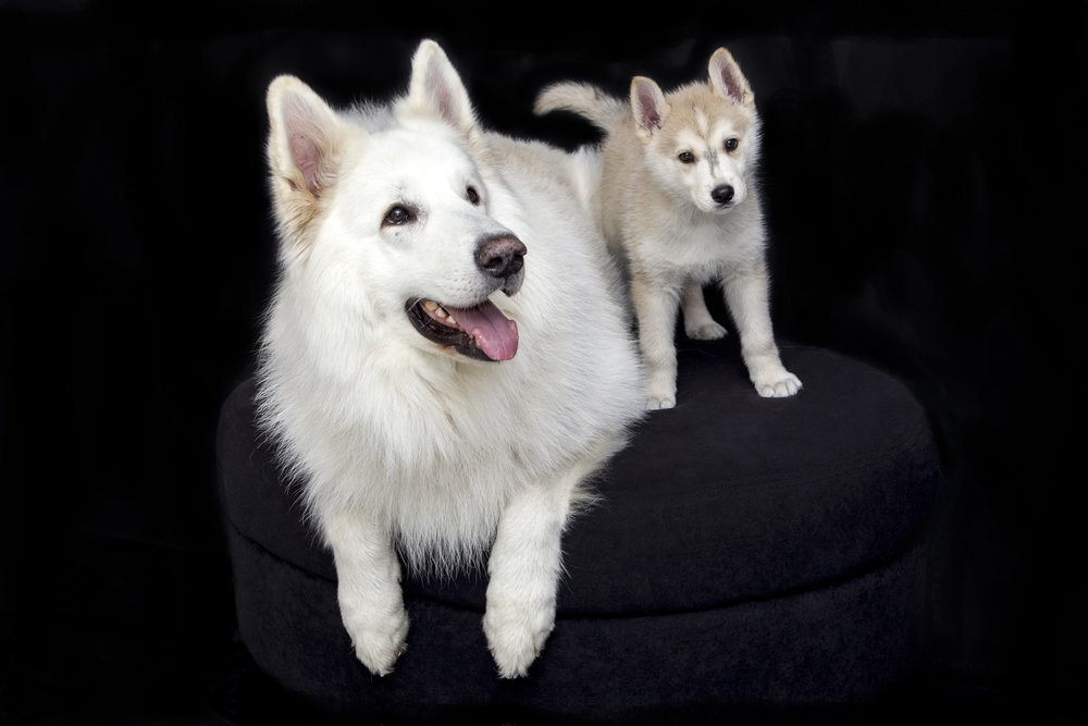 sweet-puppy-dog-cute-pet-mammal-1161937-pxhere.com.jpg
