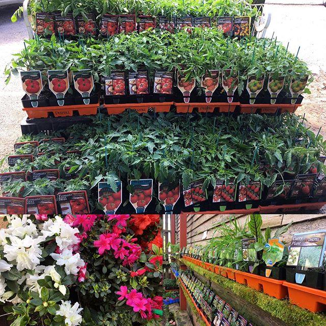 Seedling madness here at #wombathillnursery #spring #vegetables #flowers #wombathillnurseryandflorist #daylesford
