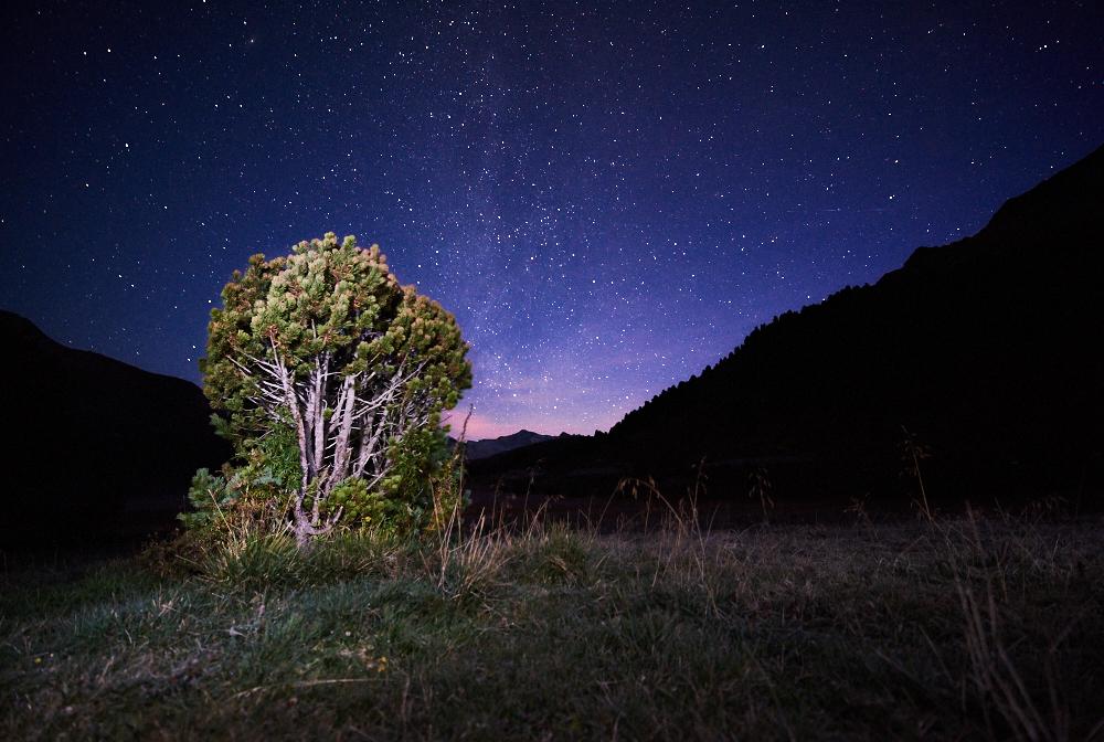 I used my flashlight to lighten up the bush.