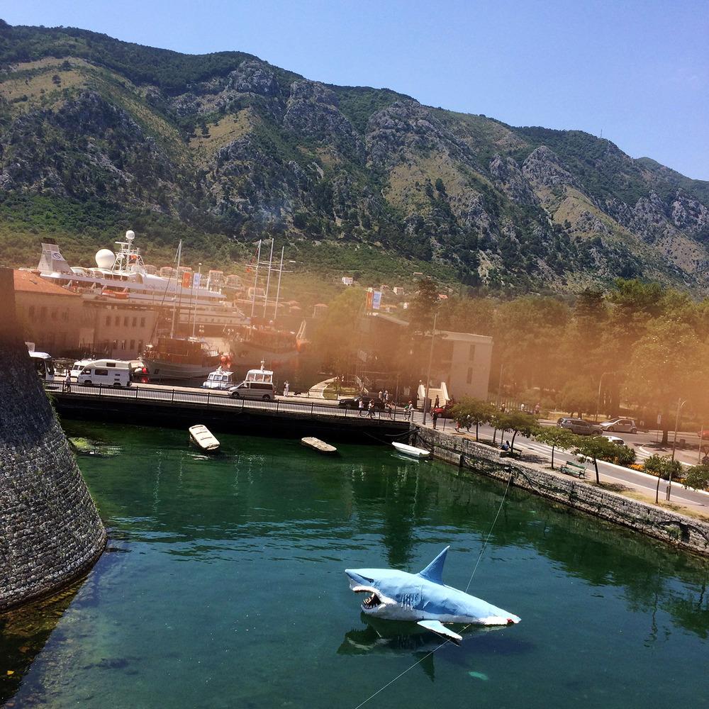 Se upp för hajar i hamnbassängen. Kotor, Montenegro.