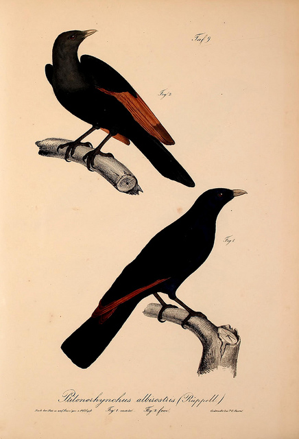 Source:  Flickr Creative Commons .  Image provided by the Biodiversity Heritage Library.
