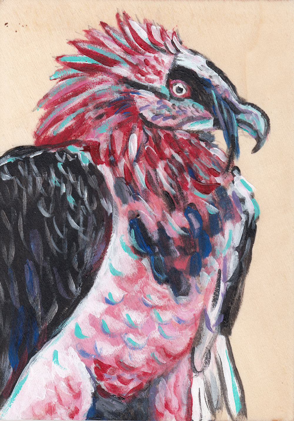 red bearded vulture inprint.jpg